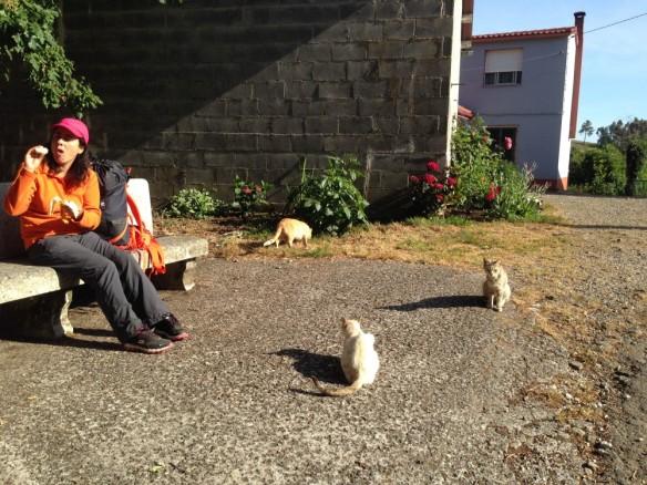 ペレグリーナとネコ達