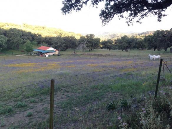 美しい牧場の朝