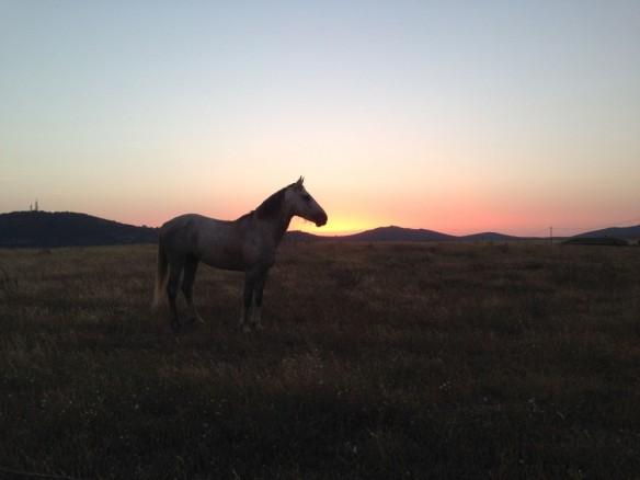 朝焼けの馬