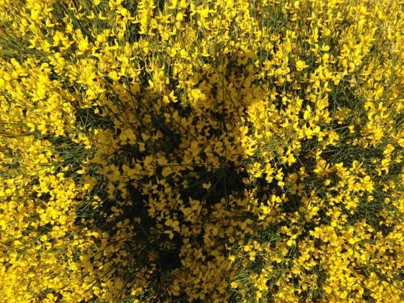 花の中のシルエット