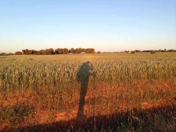 朝の長い影