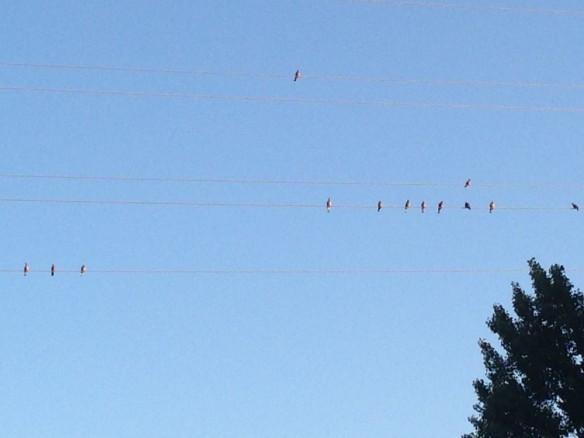 今日の空と鳥達