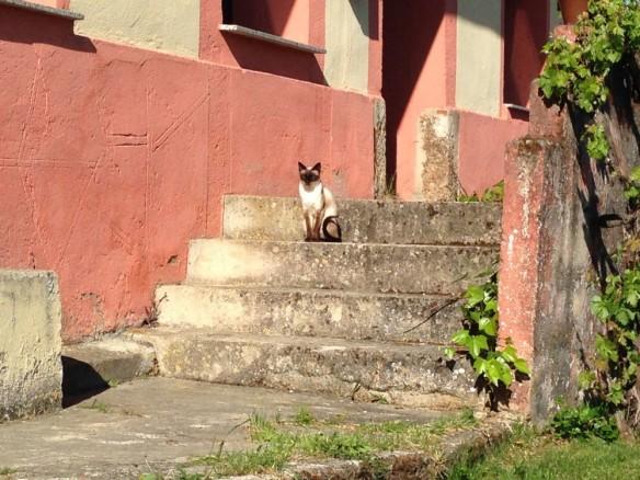 階段にたたずむネコ
